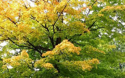 Ottobre: le foglie, la malinconia, la marcia della pace, la musica